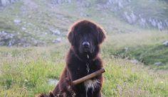 Osteuropa mit Hund : Tag 6 - Rucksackwanderung Etappe 2 | Dinky Predators