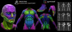 Carlos Cruz  Hey guys! I would like to share my first Gumroad Tutorial called Modular Anatomy. I've always struggled using low subdivision meshes in my personal and production workflow, so I decided to create a Male base mesh cut into different subtools and different polygroups for easy selecting and sculpting. On the tutorial you will find 2 videos explaining how the Modular anatomy works, one ZTL file with the T-pose of the male model, a posed version with al