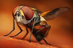 Amazing Macro Insect Photography by Dusan Beno Photos - 013