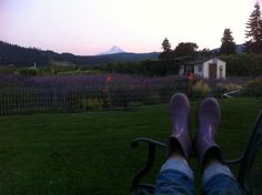 Relaxing in the garden..day is done ~~ #relaxing #garden #lavenderfarm #organic #oregon #hoodriverlavender #oregon #fruitloop