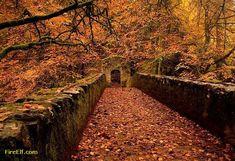 The Hermitage In Autumn - Dunkeld, Scotland