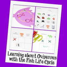 Fish Life Cycle Craft and Oviparous Animals #fishlifecycle #ece #craftsforkids #wikkistix