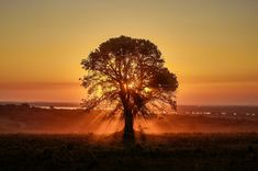 Sun rays filtered through the tree