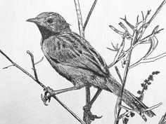 Heggenmus 2017 Owl, Fine Art, Bird, Illustration, Animals, Animaux, Owls, Birds, Illustrations