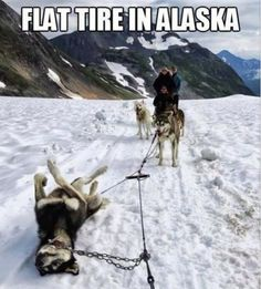 flat tire in,alaska,dog,meme Join our podcast at