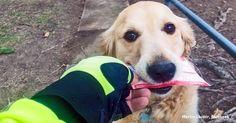 Este cãozinho adora tanto receber correspondências que o carteiro lhe fez algo inestimável
