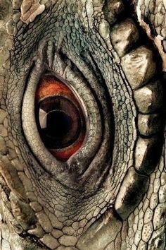 Blue iguana, Grand Cayman - photo by Joel Sartore Les Reptiles, Reptiles And Amphibians, Macro Photography, Animal Photography, Photo Oeil, Reptile Eye, Regard Animal, Art Grunge, Animals And Pets