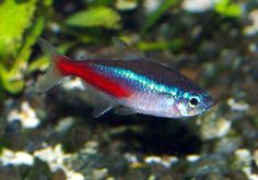 Looking for #Aquariums Plants and supplies.