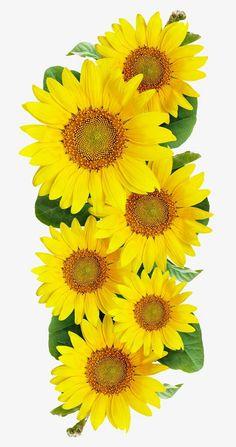 paintings of sunflowers sunflower