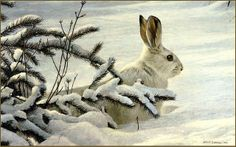 robert bateman paintings