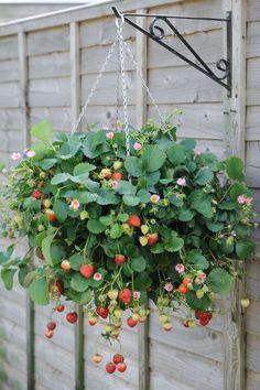 Las plantas en Chelsea Flower Show 2017 Strawberry Flower, Strawberry Garden, Strawberry Plants, Fruit Plants, Hydroponic Gardening, Container Gardening, Shade Garden, Garden Plants, Fruit Garden