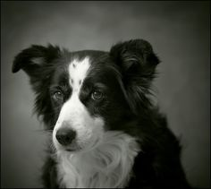 Are you serious... yet ANOTHER dog portrait? - Canon Digital Photography Forums