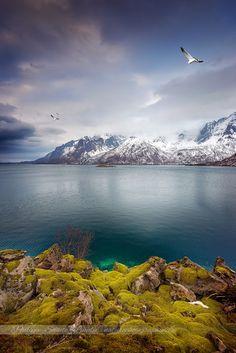 Beautiful Lofoten ! http://www.naturephotographie.com/portfolios/voyages/les-iles-lofoten-svolvaer #lofoten   #landscape   #norway