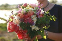 Can't Pick - Floret Flowers