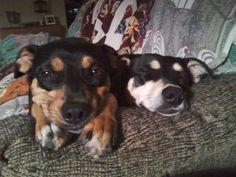 Grandpuppies - Diesel and Ripley