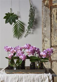 Trendy & magnificent jungle looking interior with Orchids ©Anthura #phalaenopsis #9cm #Santos #pink