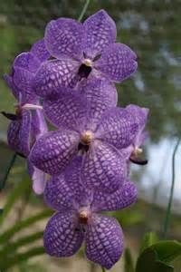 Orchid World - Yahoo Image Search Results