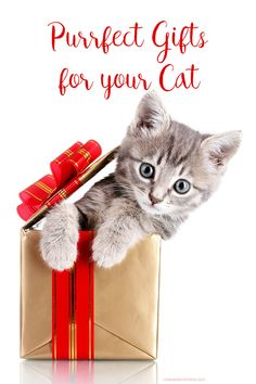 Happy Birthday Cat – Happy Bday Wishes for your Per Cat Happy Birthday Flower, Happy Birthday Pictures, Happy Birthday Funny, Happy Birthday Quotes, Cat Birthday, Animal Birthday, Happy Bday Wishes, Happy Birthday Greetings, Birthday Blessings