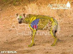 Grands gibiers africains - Le blog de Alex.bowhunter Africa Hunting, Bow Hunting, Impala, Kangaroo, Moose Art, Elephant, Animals, Badger, Dog