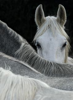 Interesting how the backs of the horses form what is almost a grayscale.