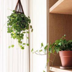 집꾸미기 Plants, Plant, Planets
