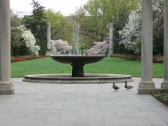 by Brooklyn Botanic Garden, via Flickr