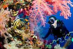 Many people think of the Great Barrier Reef when Australia diving comes up, but in this wonderfully diverse region, it is important to see the forest for the trees. Here are 3 must-dive sites of Australia. http://aquaviews.net/scuba-dive-destinations/3-fantastic-dive-sites-australia/