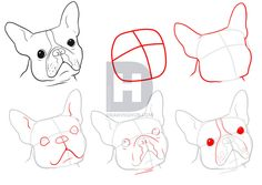 I wanted to do another tutorial on a popular dog breed that most folks would be familiar with when seen at first glance. As I was thinking I began rea