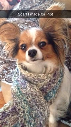 Pippa's new scarf #papillion