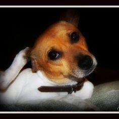 Elliott is a contestant for True Chews Dog of the Week! #TrueChews