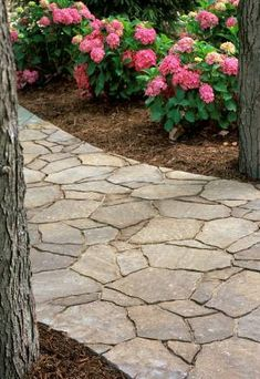 Walkways | Paths and Walkways - WBTV 3 News, Weather, Sports, and Traffic for ...