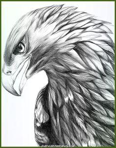Eagle Tattoo & Bildideen Eagle Tattoo & Bildideen The post Eagle Tattoo & Bildideen & Zeichnen appeared first on Hautproblem . Pencil Art Drawings, Bird Drawings, Animal Drawings, Drawings Of Eagles, Tattoo Sketches, Drawing Sketches, Tattoo Drawings, Pen Tattoo, Tattoo Cat