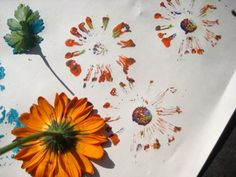 Make prints with fresh picked flowers, a great way to teach kids about different plant and flower varieties.