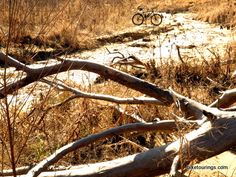 Picture of mountain bike on bank of creek wash meadow in Bastrop State Park, TX