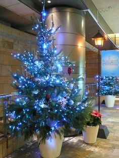 photosblue christmas decorations - Bing Images