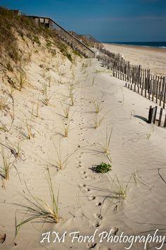 Outer Banks - Pine Island