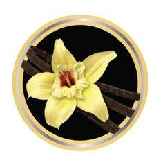 Vanilla Flavored E Liquid | Smoking Vapor Vanilla Flavored EJuice