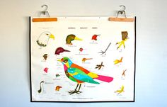 vintage school chart: double sided bird studies and cell division