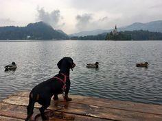Things to do in Lake Bled: Walk around Lake Bled