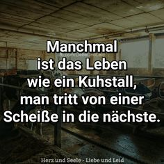 Manchmal ist das Leben wie ein Kuhstall... Besucht uns auch auf ---> https://www.herz-und-seele.eu
