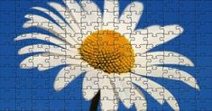 96 pieces Free Online Jigsaw Puzzles, Daisy, Wallpaper, Flowers, Wallpapers, Daisies, Royal Icing Flowers, Flower, Florals