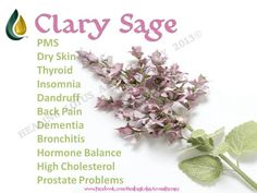 Clary Sage. Anybody interested in purchasing the oils or learning more can email me at info@allaboutumassage.ca Or follow us on FB: www.facebook.com/allaboutumassage Distributor: All About U Massage #1368262