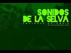 Sonidos de la Selva - Indigenas cantando Amazonas - YouTube