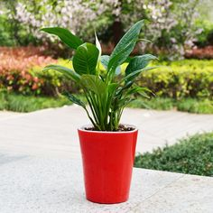 Usage Condition: DesktopFinishing: Not CoatedStyle: Chinese StyleModel Number: With: Flower/Green PlantSet Type: YESMaterial: PlasticPlastic Type: Polyresin Self Watering Plants, Planting Flowers, Flower Plants, Water Flowers, Potting Soil, Potted Plants, Roots, Planter Pots, Vases