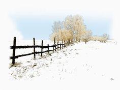 'Winterweide'+von+Dirk+h.+Wendt+bei+artflakes.com+als+Poster+oder+Kunstdruck+$18.03