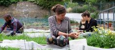 Urban agriculture is sprouting up all over the world.