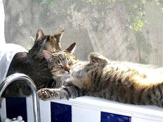 Sunbathing Cats by malamutechaos, via Flickr