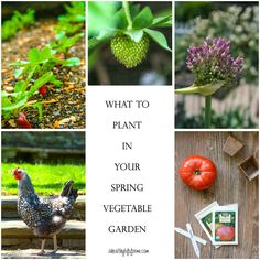 What to Planting  in Your Spring Vegetable Garden ! Excellent Post !!