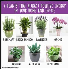 7 Plants that attract Positive Energy