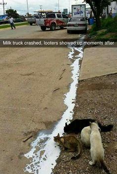 """""""Milk truck crashed, looters showed up moments after."""""""